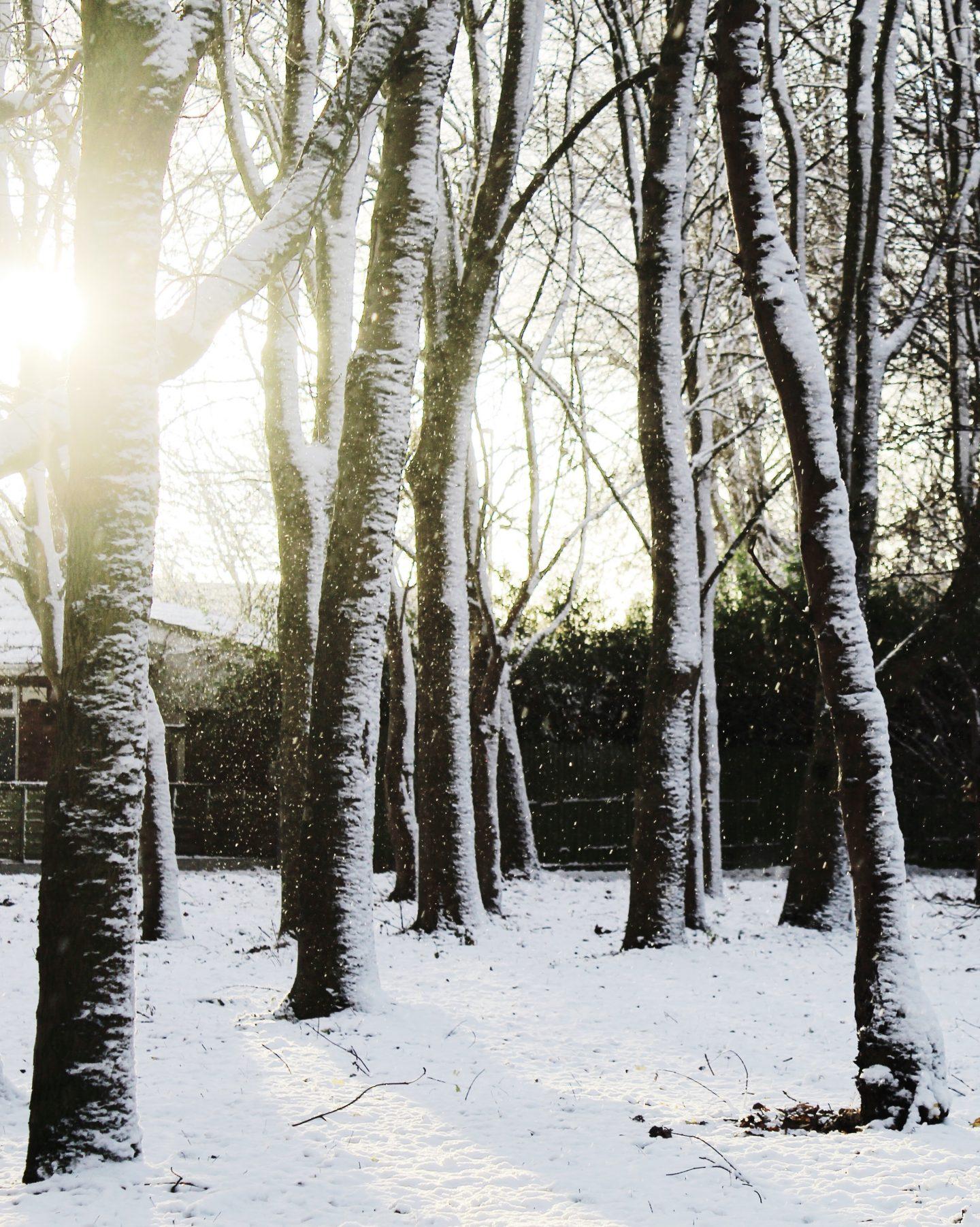 Winter Wonderland | Blogmas Day 9
